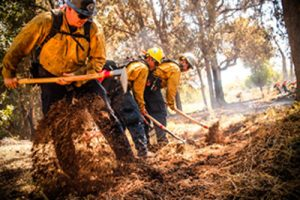 hand crew clearing dry vegetation
